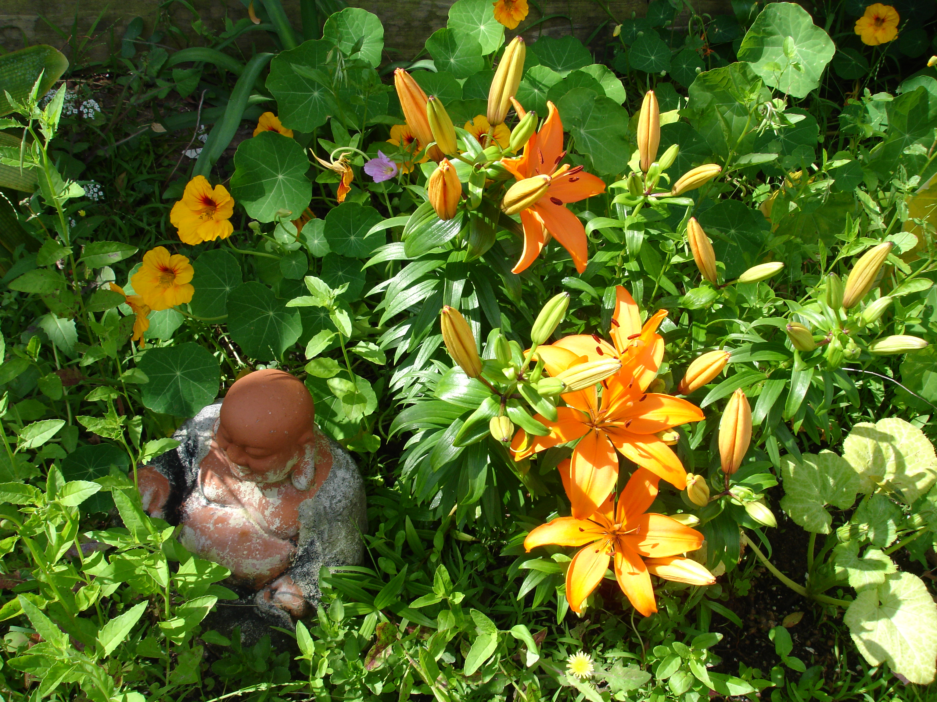 Tiger Lily Pam In The Garden